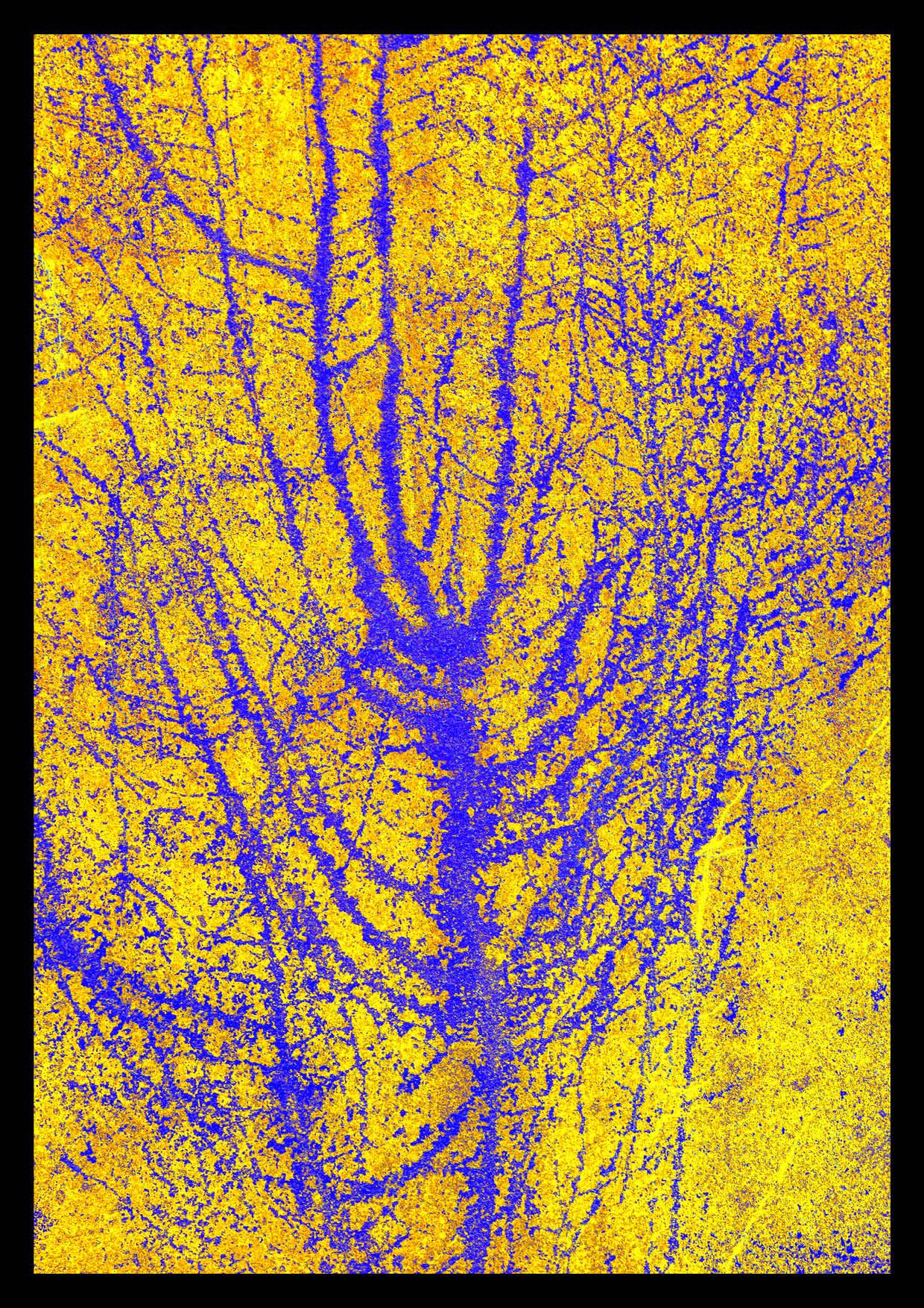 Arborescence Variations Chromatiques jaune